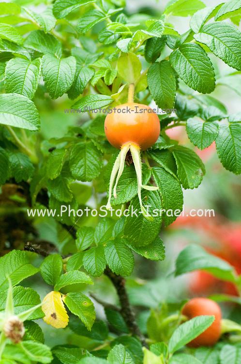 Flowering Orange Garden plants