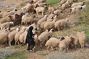 Female Beduin shepherd Photographed in Israel, Negev