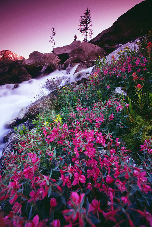 July 21, 2019 - Wildflowers, Bugaboo Provincial Park, British Columbia, Canada (Credit Image: © Bilderbuch/Design Pics via ZUMA Wire)