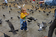 Krakow, Poland summer in Rynek Glowny (old town square) Pigeons attack little girl feeding them.