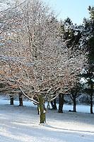 Snow covered tree on Killiney Hill Dublin  November 2010