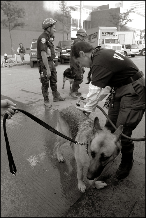 Veterinary Medical Assistance Teams (VMATs) were deployed for the first time, on September 11, 2001, by the federal government to maintain the health of service dogs canvassing for the missing. Kermit was one of the search and rescue dogs working at ground zero being treated by the VMAT team.