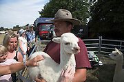 Baby llama stroked as held by handler