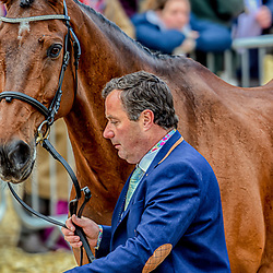 Michael Ryan Badminton horse trials Gloucester England UK May 2019. Michael Ryan equestrian eventing representing Ireland riding Dunlough Striker in the 2019 Badminton horse trials Badminton Horse trials 2019 Winner Piggy French wins the title