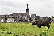 Nederland, Nijmegen, 16-10-2018Wilde runderen grazen op het Lentereiland, Veur Lent, het eiland dat is ontstaan door de aanleg van de nevengeul tegenover de stad. Natuurbegrazing door het uitzetten van Schotse Hooglanders. De grazers lopen op de oever en houden de begroeing laag en divers. Ze zijn uitgezet door de stichting Taurus die zich ook bezighoudt met het terugfokken van het Europese oerrund, de oerkoe. Foto: Flip Franssen
