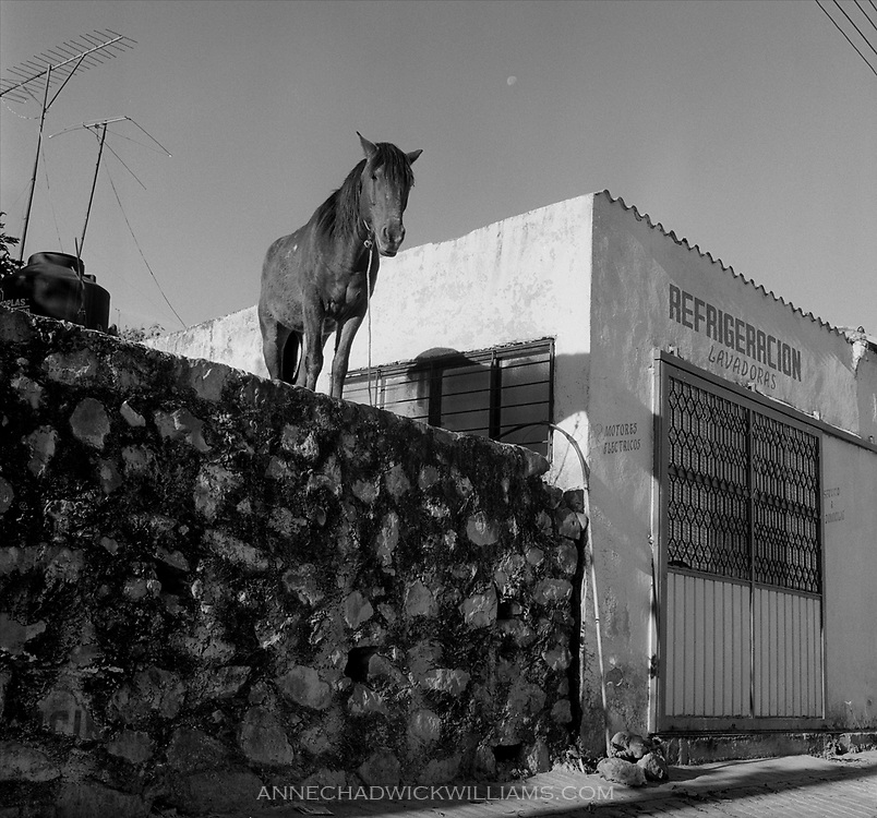 A Mexican horse looks down at passers-by in Cuernavaca, Mexico.