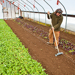 Planting mesclun seeds in a greenhouse in South Hampton, New Hampshire. Heron Pond Farm greenhouse.  February.