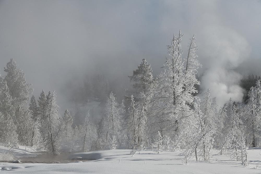 Winter mornings in the Upper Geyser Basin, Yellowstone