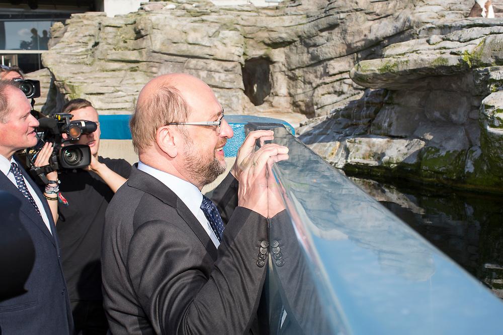 So nah, und doch so fern: Martin Schulz versucht Kontakt zu einer Gruppe Pinguine aufzunehmen, an einem Aussenbecken des Ozeaneums Stralsund. Die Pinguine bleiben aber auf Distanz. Zum Auftakt der heissen Wahlkampfphase besucht SPD-Kanzlerkandidat Martin Schulz zusammen mit Manuela Schwesig, Ministerpraesidentin des Landes Mecklenburg-Vorpommern, das Ozeaneum Stralsund und anschliessend ein Buergerfest auf der Hafeninsel.