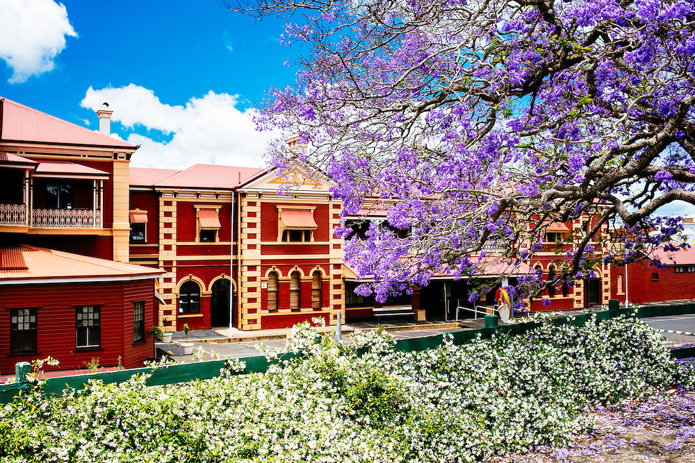 Spring flowers abundantly flowering in front of the Toowoomba Railway Station.