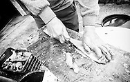 Cleaning and gutting freshly caught carp (saran) in a village near Virpazar and Lake Skadar, Montenegro
