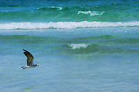 Flight of the Seagull, South Beach
