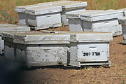 Bee hives & wildflowers in the field. Photographed in Israel