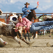 A cowboy wrestles a steer at the Wilsall Rodeo in Montana.