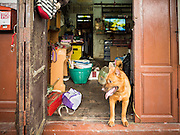 14 SEPTEMBER 2015 - BANGKOK, THAILAND:  A dog in the doorway of a home near Wat Kalayanamit. The family that owns the dog has lived in the home for more than 100 years and is being evicted this week. Fiftyfour homes around Wat Kalayanamit, a historic Buddhist temple on the Chao Phraya River in the Thonburi section of Bangkok are being razed and the residents evicted to make way for new development at the temple. The abbot of the temple said he was evicting the residents, who have lived on the temple grounds for generations, because their homes are unsafe and because he wants to improve the temple grounds. The evictions are a part of a Bangkok trend, especially along the Chao Phraya River and BTS light rail lines. Low income people are being evicted from their long time homes to make way for urban renewal.           PHOTO BY JACK KURTZ
