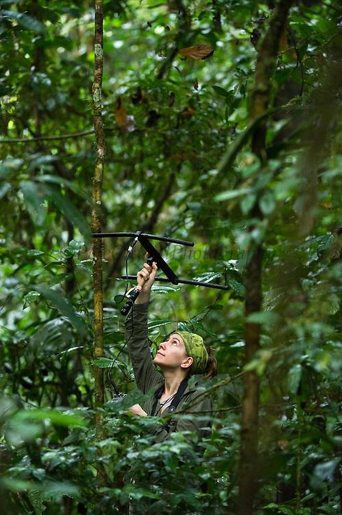 Amy Porter. Primatologist/Researcher studying Ecuatorial Saki and Red Titi Monkeys.<br /> Tiputini Biodiversity Station, Adjacent to  Yasuni National Park, Amazon Rainforest<br /> ECUADOR. South America<br /> HABITAT & RANGE:
