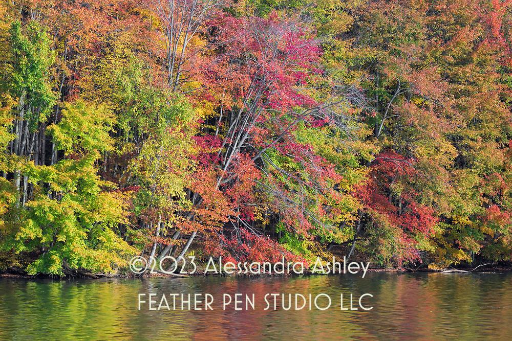 Mixed autumn foliage along shoreline of Clear Fork Reservoir.