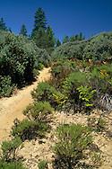 Trail through sandhills habitat, Bonny Dune Ecological Preserve, Santa Cruz Mountains, California