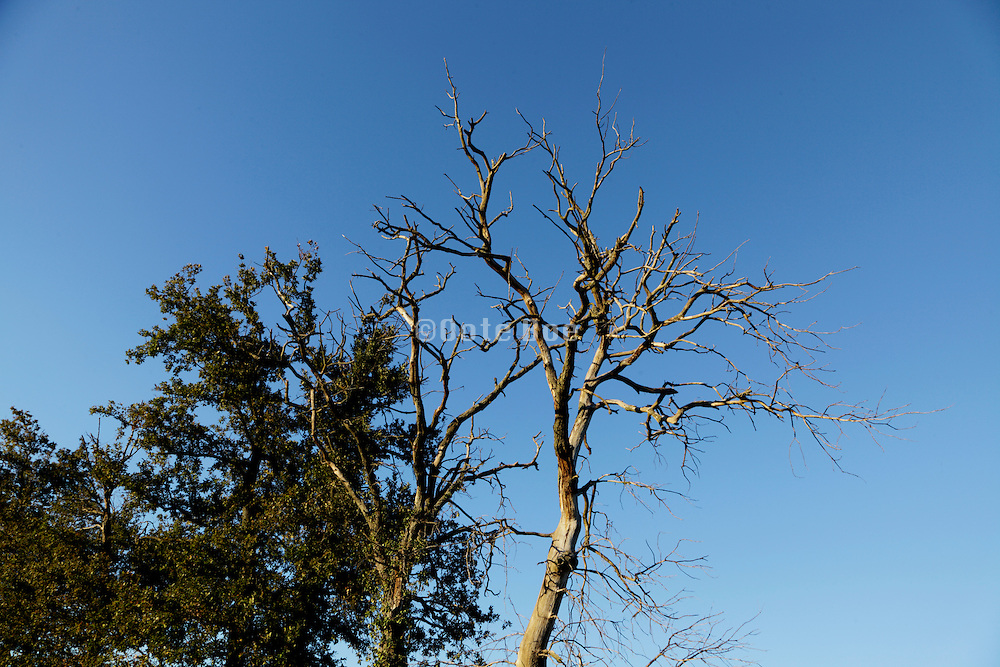 top of a dead tree against a blue sky