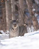 Feline Fur