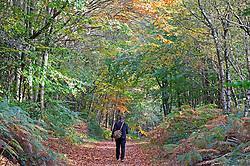 ©Licensed to London News Pictures 19/10/2020  <br /> Sevenoaks, UK. A walker enjoying the autumnal weather at Toys Hills woodland, Sevenoaks, Kent. Photo credit:Grant Falvey/LNP