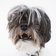 Dog photographed while waiting for adoption at the humane society.  Pet photography by Michael Kloth.