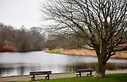 Uitzicht op meertje bij het Westbroekpark, Den Haag - View to a small lake near Westbroekpark, The Hague, Netherlands
