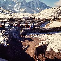 Sherpas set up a trekers camp in Pheriche village in the Khumbu region of Nepal. 1979