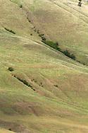 Pasture on Vernon Mountain in Coldstream, British Columbia, Canada