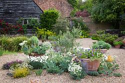 Self-seeding plants in gravel including Crambe maritima (Sea Kale), Dianthus 'Mrs Sinkins' and white Helianthemum