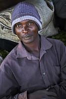 Kenya, Kericho county, Kericho, collecte et pesage du thé // Kenya, Kericho county, Kericho, tea collect and weighing