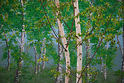 Real Silver Birch trees stand in front of a painted mural of fake Silver Birches at a car park in East London.