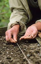 Sowing seed outdoors using string for guidance<br /> Sowing finely by hand