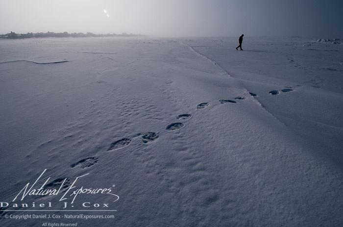 Pilot Bob Dunbar checks direction of polar bear tracks on the Beaufort Sea ice pack. Alaska