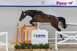 067, Number One<br /> KWPN Hengstenkeuring 2021<br /> © Hippo Foto - Dirk Caremans<br />  02/02/2021