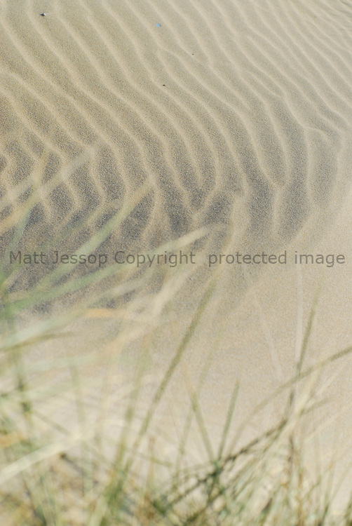 Sand Dune and Grass