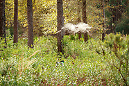 Georgia quail hunt 2019