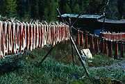 Red Salmon drying on fish racks at Dena Ina Native Sophie Austin's cabin, shore of Lake Clark, Lake Clark National Park, Alaska.