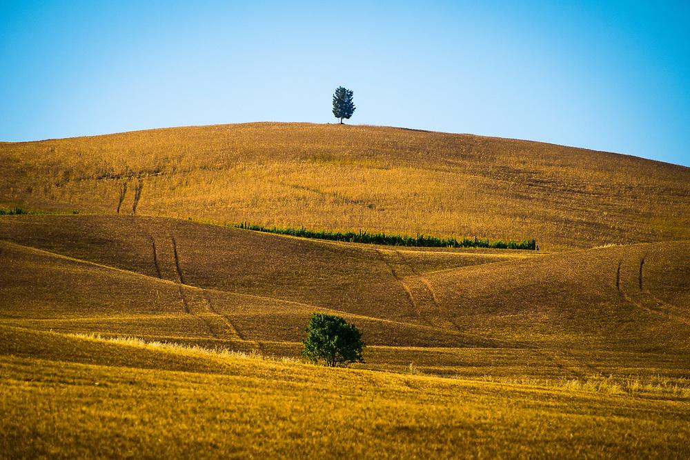 Tuscan Landscape in july<br /> Photo by Lorenz Berna