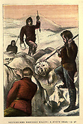 Shipwrecked mariners Killing a White Bear From the Book ' The history of Sandford and Merton ' by Thomas Day, 1748-1789; with original illustrations printed in colours by Edward and George Dalziel,