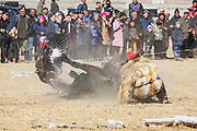 A Kazakh eagle hunter crashes when his horse stumbles and flipped upside down at an eagle festival, Altai Mountains, Bayan Ulgii, Mongolia