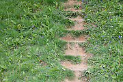 Steps run up a steep field of Dandelions and Blue Bells on the Cotswold Way on Cam Long Down