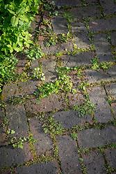 Weeds and grass growing between cracks in brick paving