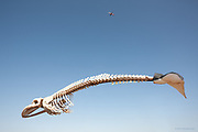 """International Color Awards 2015 - Nominee in """"Fine Art"""" category<br /> <br /> This is not a composite. The plane flew over a Whale's skeleton mounted on posts. I just removed the posts.<br /> <br /> This skeleton is that of a 'Fin Whale' (Balaenoptera physalus) - the second largest living animal on earth."""