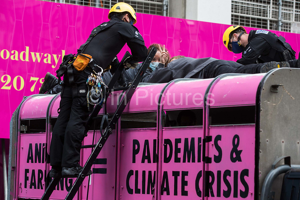 British Transport Police officers attend to animal rights activists from Animal Rebellion who had glued themselves to the top of and inside a truck in order to blockade the Department of Health and Social Care on 3 September 2020 in London, United Kingdom. Animal Rebellion activists are protesting in solidarity with victims of the global food system and to demand that the UK transitions to a sustainable plant-based food system.