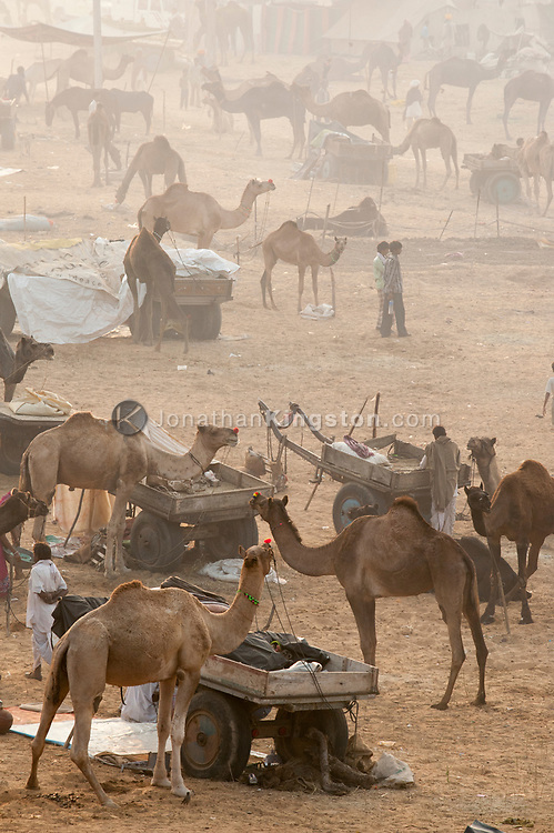 View of the Pushkar mela grounds, Pushkar, Rajasthan, India.