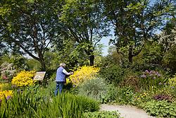 North America, United States, Washington, Bellevue, woman in Bellevue Botanical Garden