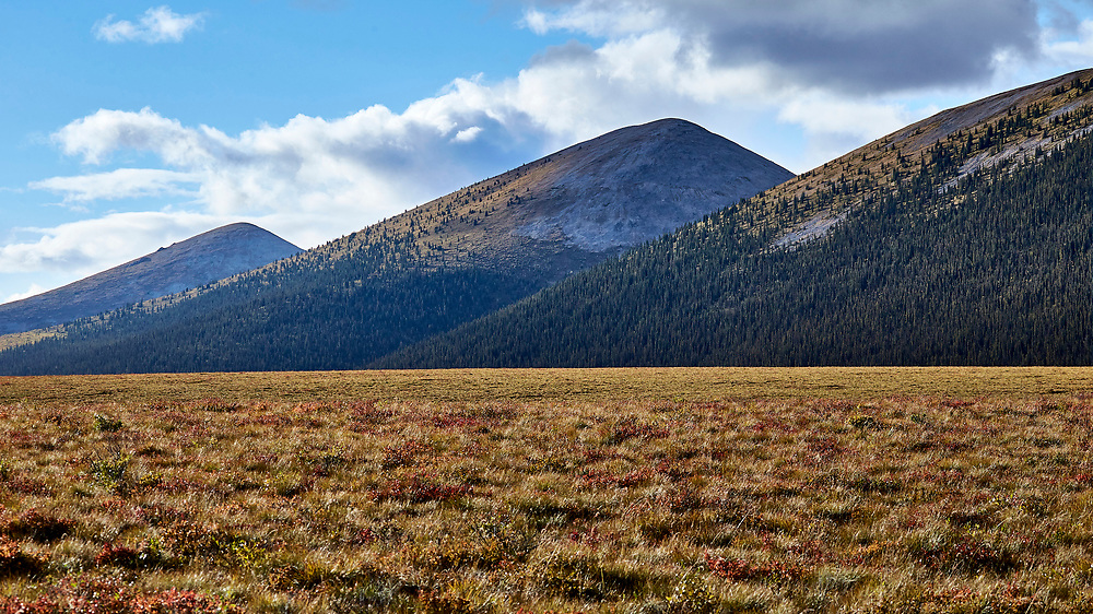 Nature serves up large scale patterns along the Dempster Highway, Yukon.