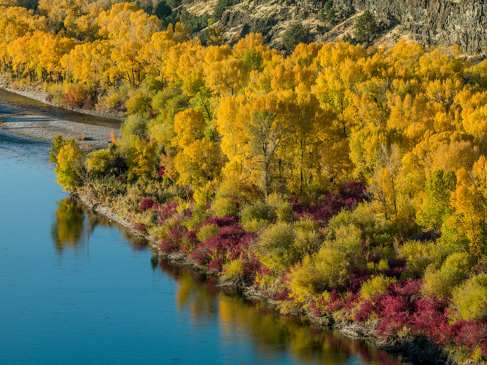 South Fork of the Snake Rivers Edge Detail of Autumn Grandeur near Ririe, Idaho.  Licensing and Open Edition Prints
