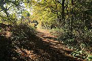 Footpath through autumn colours trees Sandlings heathland, Sutton, Suffolk, England, UK